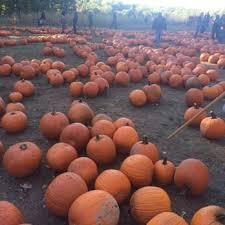 Pumpkin Picking Nj by Demarest Farm 185 Photos U0026 150 Reviews Markets Hillsdale Nj