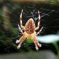 araignée présages croyances superstitions