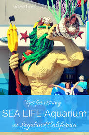 Pumpkin Patch Carlsbad Mall by 145 Best Family Reunion Ideas Images On Pinterest Family