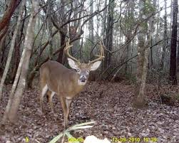When Do Deer Shed Their Antlers Ontario by Field U0026 Stream Picks The 50 Best Buck Stories Of 2010 Field U0026 Stream