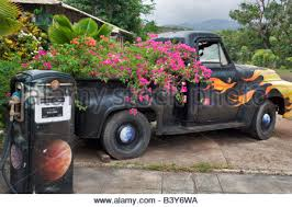 Old Pickup Truck With Bougainvillea Flowers In Bed Kauai Hawaii