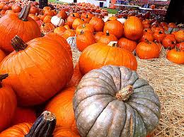 Las Cruces Pumpkin Patch Maze by Haunted Houses Pumpkin Patches And Trick Or Treating U2013 El Paso