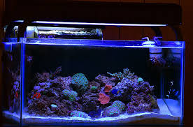 t5ho information lighting forum nano reef community