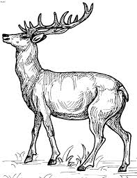 Deer Coloring Pages Tumblr Google Yahoo Imgur Wallpapers Images