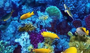 National Aquarium Parking Discounts