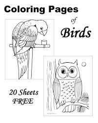 Bird Coloring Sheets And Pictures