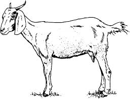 Goat Skinny Coloring Pages PagesFull Size Image