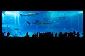 aquarium geant a visiter belgique pourquoi les aquariums sont ils une sortie incontournable à faire