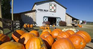 Kc Pumpkin Patch Groupon by From Skunks To Marriage Proposals Oakes Farm Has Seen A Lot Of