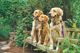 Mounts Botanical Gardens Dogs Day is 2 26 17 Palm Beach Live