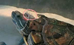 is my turtle sick pj s pet service