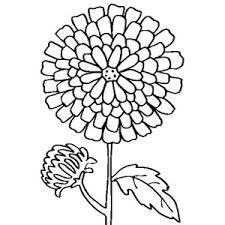 Pin Drawn Carnation Scarlet 13