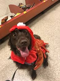 Poisoned Halloween Candy 2014 by Halloween Tips For Pet Owners Pismo Beach Veterinary Clinic
