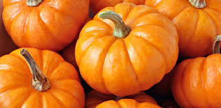 Pumpkin Patch Near Pensacola Fl by Take A Trip Back In Time On A Biplane Ride Meyer Vacation Rentals