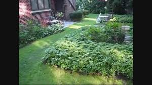 Ditco Tile The Woodlands by Pachysandra Propagation Great Facts About Pachysandra Plant The