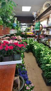 Teleflora Coupon Code And Promo Code 2016: Get To Know One ... Save 50 On Valentines Day Flowers From Teleflora Saloncom Ticwatch E Promo Code Coupon Fraud Cviction Discount Park And Fly Ronto Asda Groceries Beautiful August 2018 Deals Macy S Online Coupon Codes January 2019 H P Promotional Vouchers Promo Codes October Times Scare Nyc Luxury Watches Hong Kong Chatelles Splice Discount Telefloras Fall Fantasia In High Point Nc Llanes Flower Shop Llc
