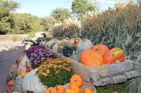 Free Pumpkin Patch Fort Collins by Diana U0027s Pumpkin Patch U0026 Corn Maze Where Fall Lives