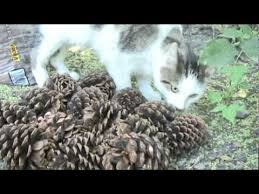 munity Cat Deterrents Learn Methods To Help Keep Cats Away