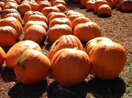 Pumpkin Patches Maryland Heights Mo by Police Post U0027pumpkin Lineup U0027 After Recovering Stolen Squash