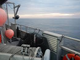 Decorator Crab Tank Mates by Marine Biology The Fsu Coastal U0026 Marine Laboratory