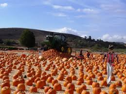 Pumpkin Patch Animal Farm In Moorpark California by The Fall Harvest Festival At Underwood Family Farms In Moorpark Is