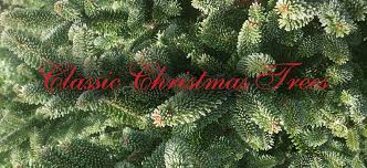 Realistic Artificial Christmas Trees Nz by Classic Christmas Trees Greytown Wairarapa Real Christmas Trees