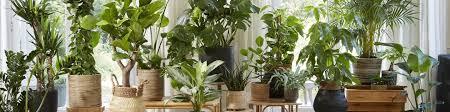 zimmerpflanzen kaufen alle zimmerpflanzen bakker