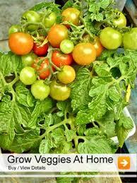 15 best vegetable seeds images on vegetable seeds