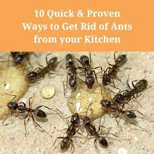 how to rid of ants in kitchen – bloomingcactus