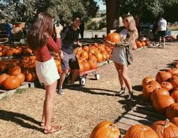 Pumpkin Patches Near Dallas Tx 2015 by 15 San Antonio Corn Mazes And Pumpkin Patches To Get You In The