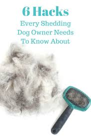 Do All Dogs Shed Fur by Best 25 Dog Shedding Ideas On Pinterest Dog Itchy Skin Remedy