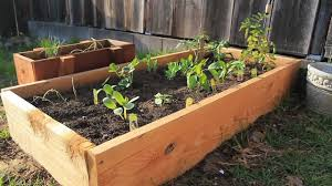 Build Your Own Raised Planting Beds