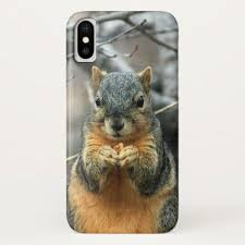 best 25 what does squirrel eat ideas on what