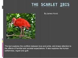 The Scarlet Ibis Introductioninlms