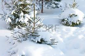 Small Christmas Tree Covered With Snow White Background Russian Nature