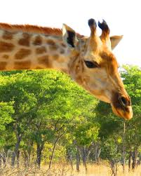 My Stint With The Animals In Africa