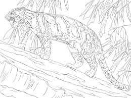 Leopards Coloring Pages