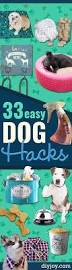 Unchewable Dog Bed by Best 25 Homemade Dog Toys Ideas On Pinterest Diy Dog Treats
