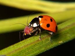 Attracting Insects To Your Garden by How To Attract Or Release Beneficial Insects In Your Garden