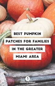 Pumpkin Patch Tampa 2014 by South Florida Join Us At The Coconut Grove Pumpkin Patch