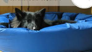 comment empecher chien de monter sur le canapé comment empêcher mon chien de monter sur la canapé