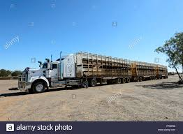 100 Cattle Truck Roadtrain Queensland Australia Stock Photo 95283306