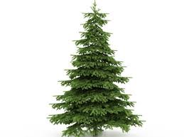 LBL Offers Free Cedar Christmas Trees