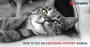 service cats 2017 update how to get an emotional support animal