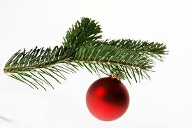Christmas Tree Species by Conifers For Christmas Evolution Above The Level Of Species