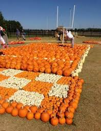 Pumpkin Patch Nashville Area by Local Alabama Pick Your Own Pumpkin Patches Alabama And Corn Maze