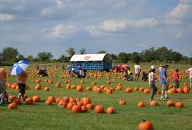 Macdonald Ranch Pumpkin Patch Hours by Weekend Fun For Houston Kids Fort Bend County Fair Pumpkin
