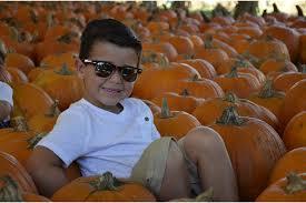 Sarasota Pumpkin Festival Location by Hunsader Farms Launches 2015 Pumpkin Festival East County Your