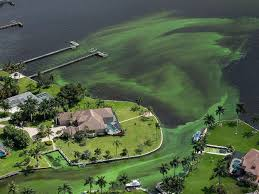 Is Bathtub Beach In Stuart Fl Open by Toxic Algae Blooms Infesting Florida Beaches Are Putting A Damper