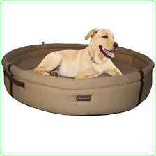 Harry Barker Dog Bed by Dog Beds For Sale Aspen Pet Sofa Bed For Dogs U0026 Cats Color